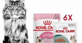 Echantillons gratuits : 6 sachets fraîcheur Royal Canin pour votre chat