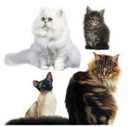 Nourriture pour chat GRATUITE par Hubo et Royal Canin