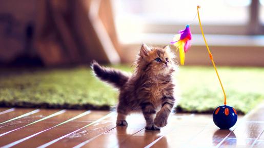 Pack cadeau pour chats à remporter