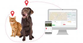 Vite… Appareils GPS pour voiture et animaux à moitié prix seulement