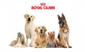 Paquet de nourriture Royal Canin Gratuit